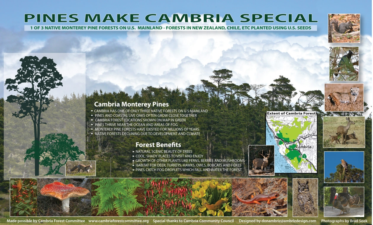 Cambria Pine Forest Sign