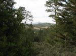 Cambria-Pines-Lodge-046.jpg